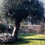 Jardin champêtre sur les collines de Quimper