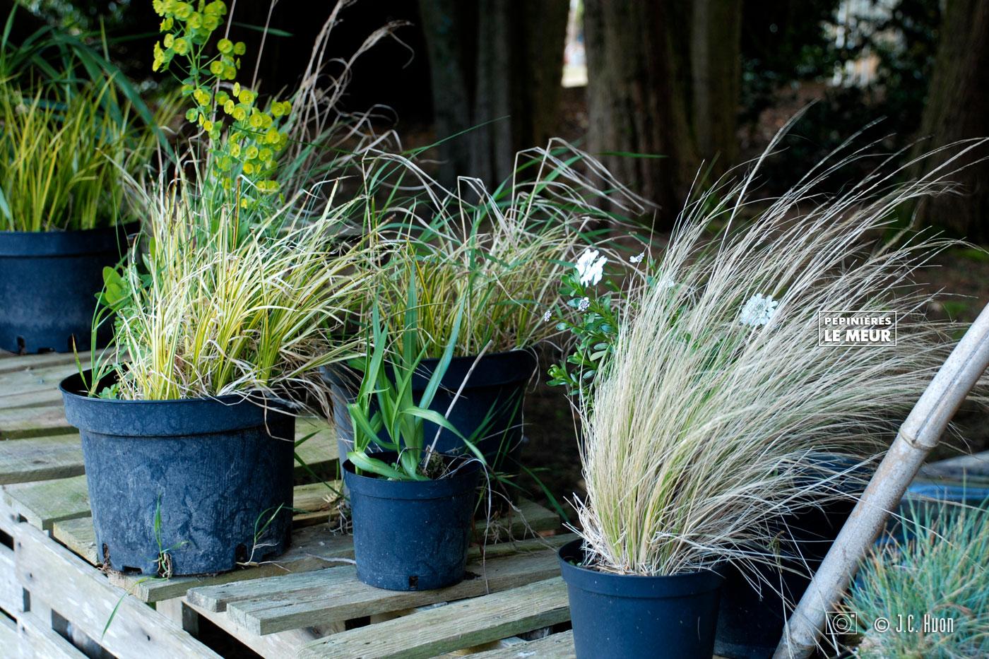 herbes-decoratifs_huon01
