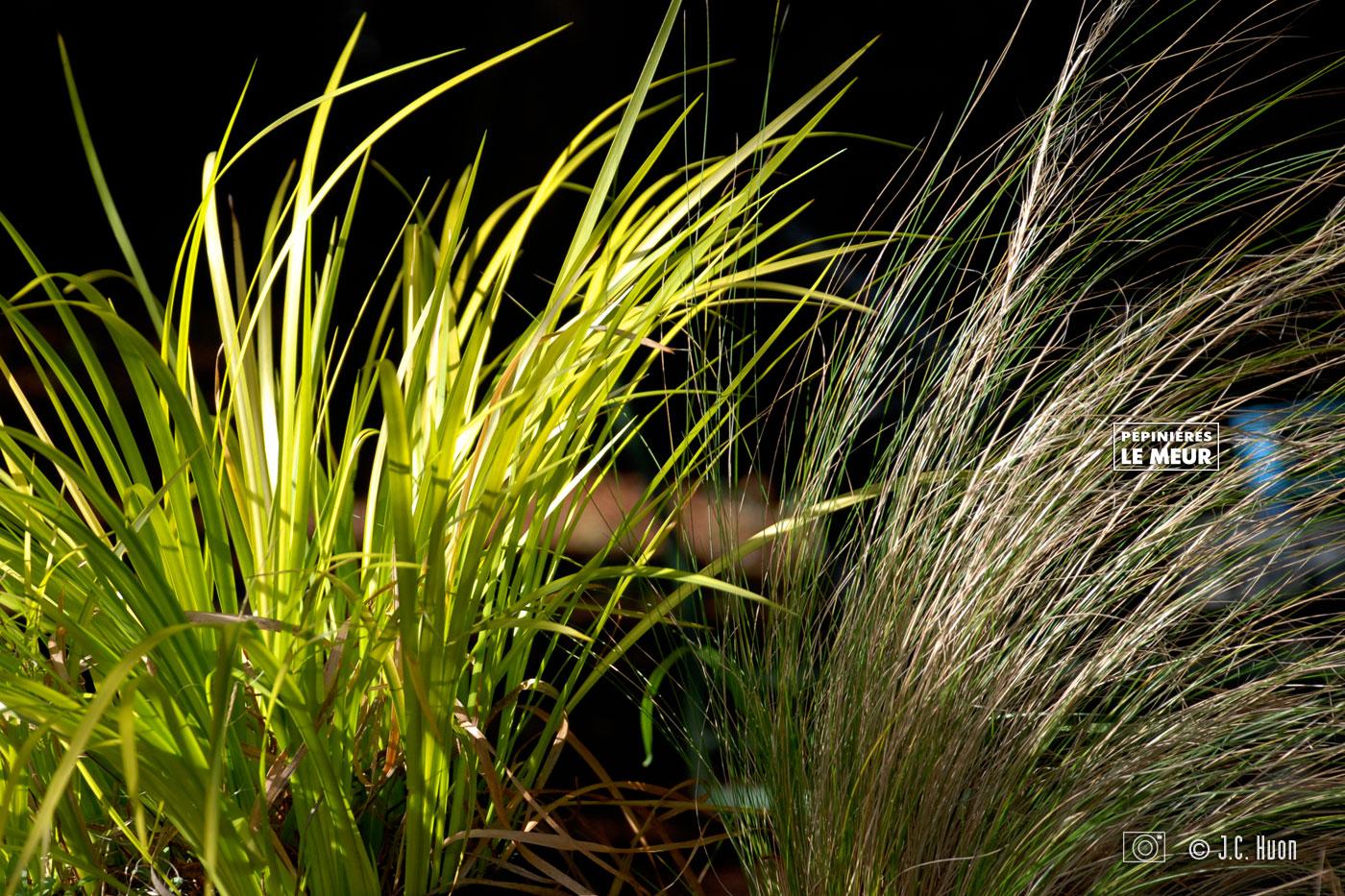 herbes-decoratifs_huon02