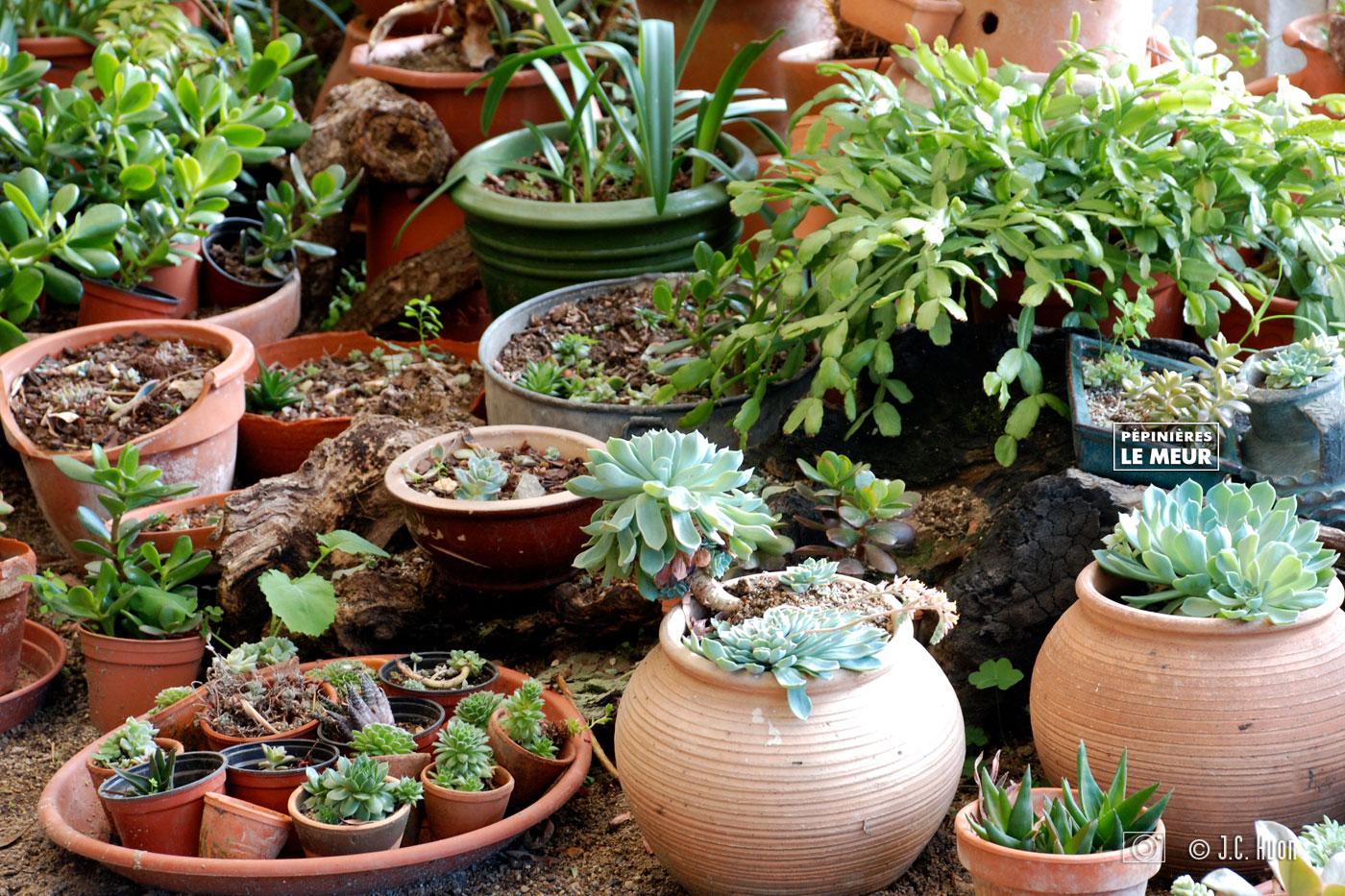 plantes-succulentes_huon01