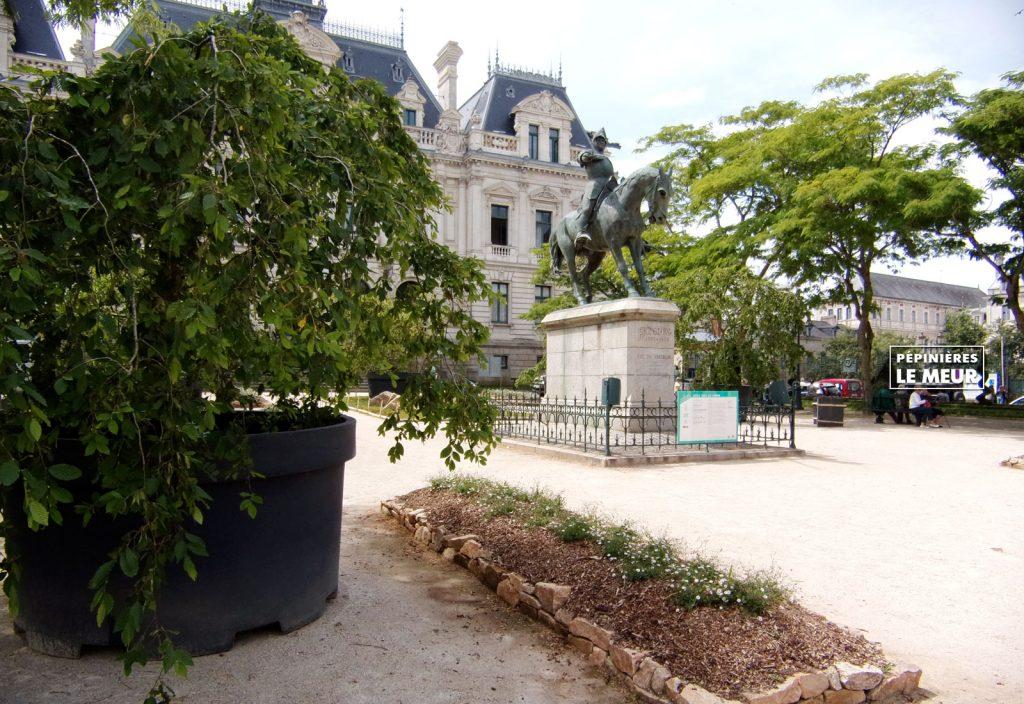 jardins éphémeres de vannes 2017 carpinus bétulus, pépinières le meur