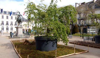 jardins éphémeres de vannes 2017 bétulus, pépinières le meur