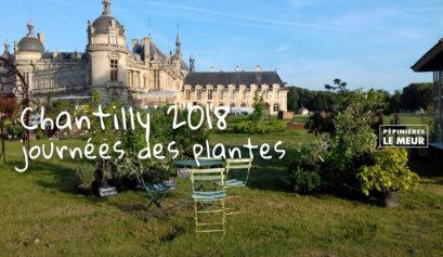 Chantilly 2018, journée des plantes Pépinières le Meur