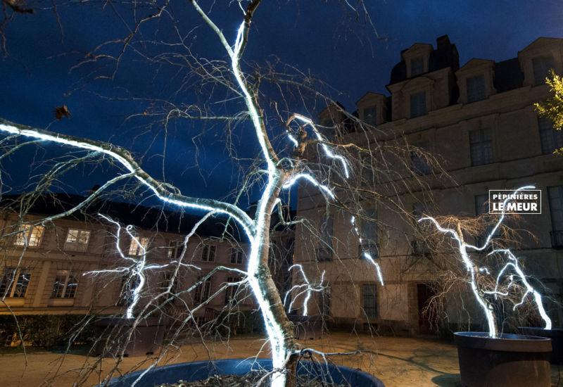 Charmes, Noël Vannes, Pépinières le Meur