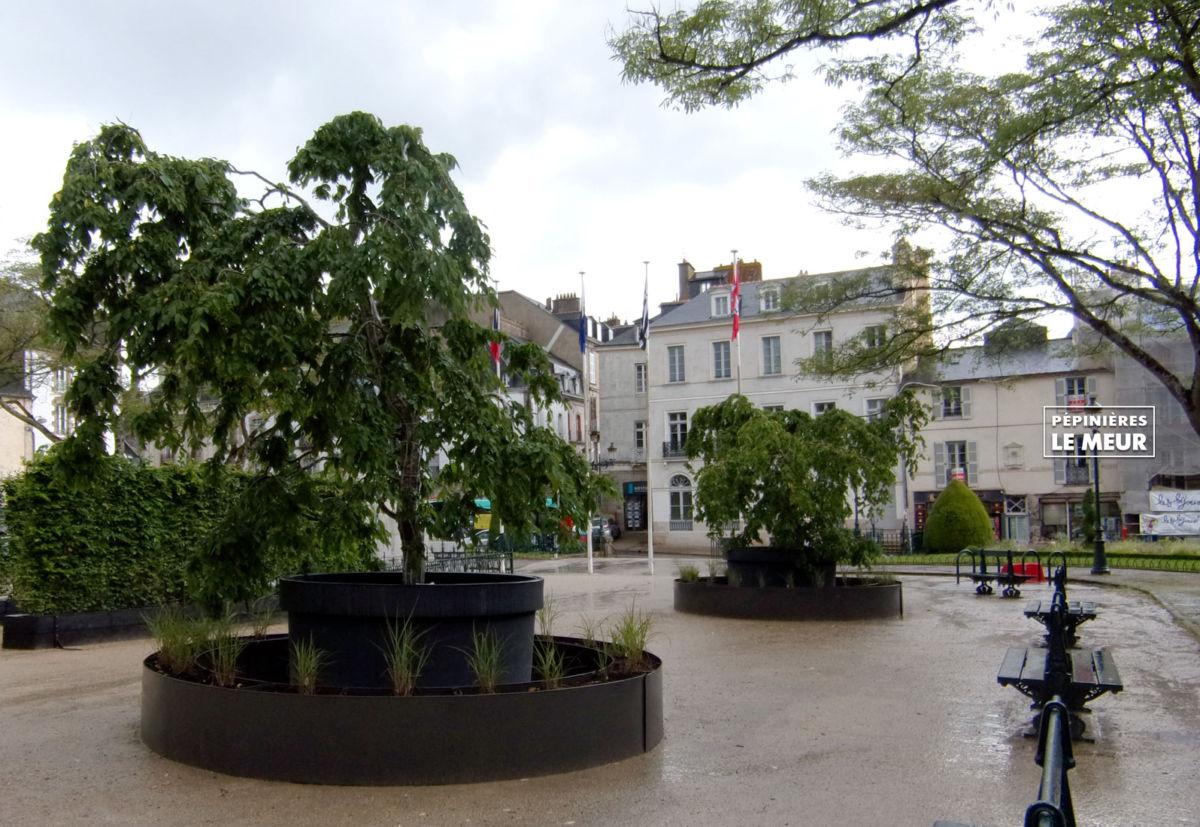 charmes, vannes, pépinières le meur, carpinus betulus, projet de Gérard Ropert